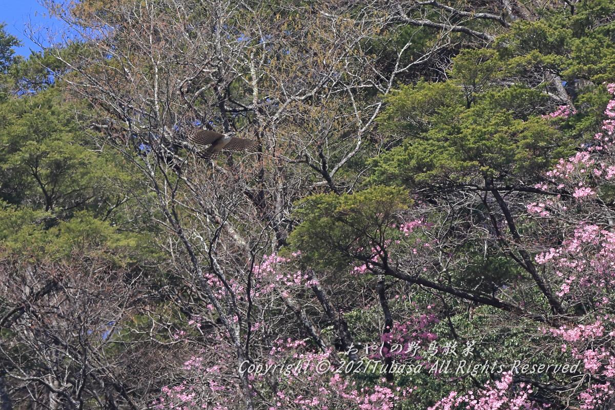 B76I8444.jpg