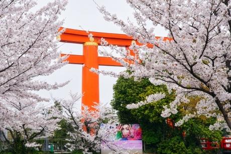 2021_kyoto_sakura_2.jpg