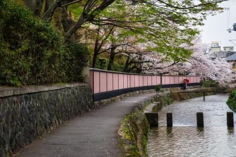 2021_kyoto_sakura_3.jpg