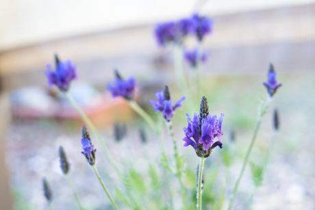 spring_6.jpg