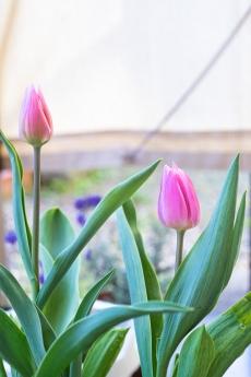 spring_7.jpg