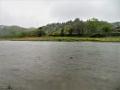 広瀬川と青葉