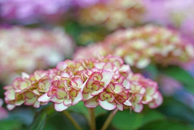 210417植物28
