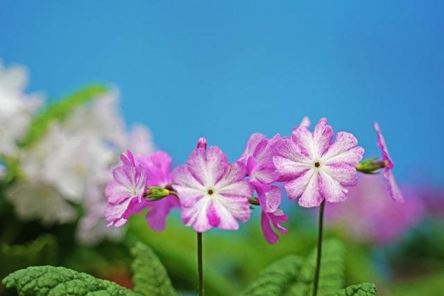 210417植物33
