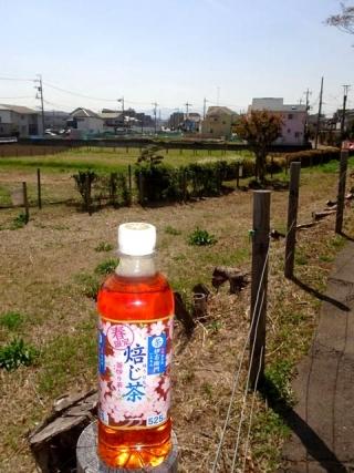 春ほうじ茶 (2)