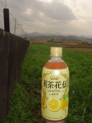 紅茶花伝 (6)