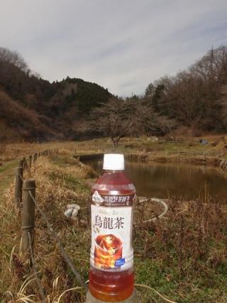 ダイドー烏龍茶 (4)