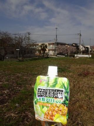 蒟蒻畑アロエ (1)