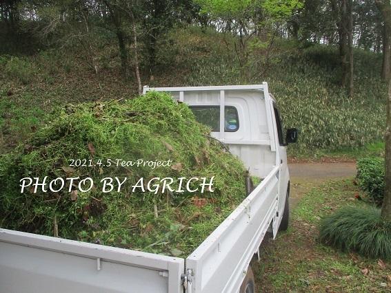 茶畑草刈り2