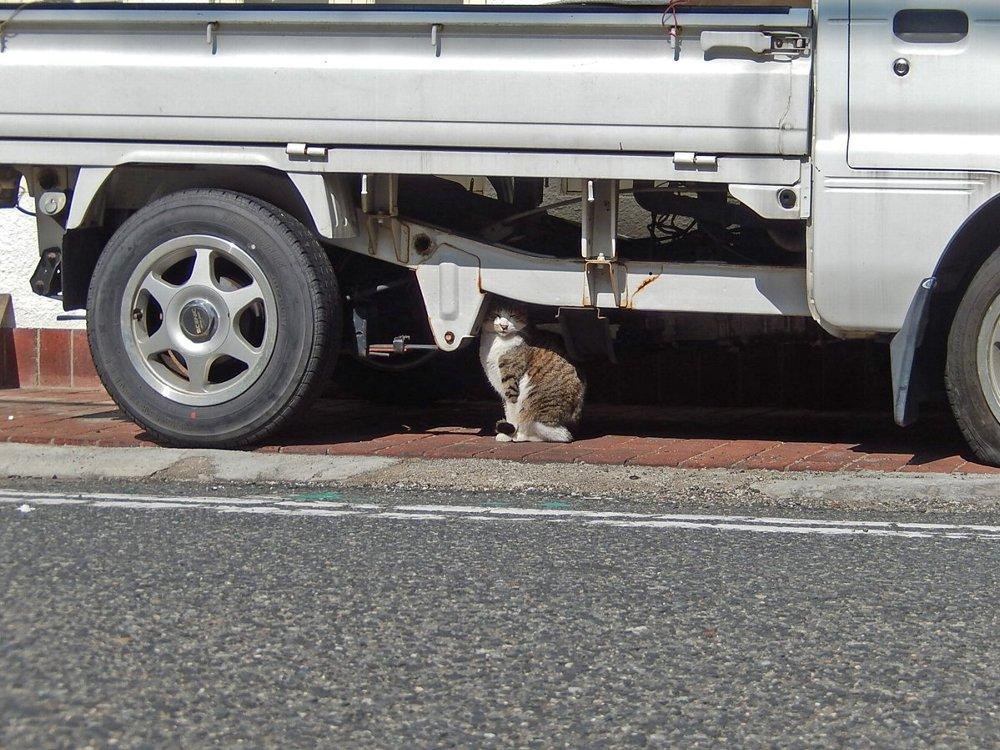 トラックの一部と化す猫