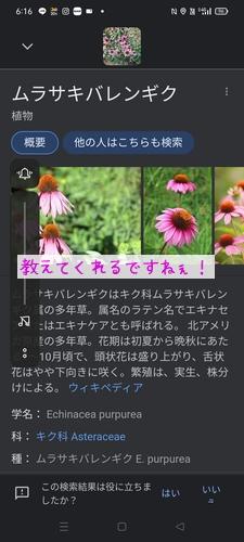 210727_Echi02.jpg