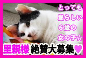 2109_okashan_boshu_banner300_fuchi.jpg