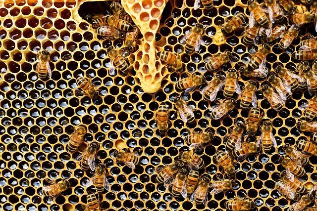 honey-bees-337695_640.jpg