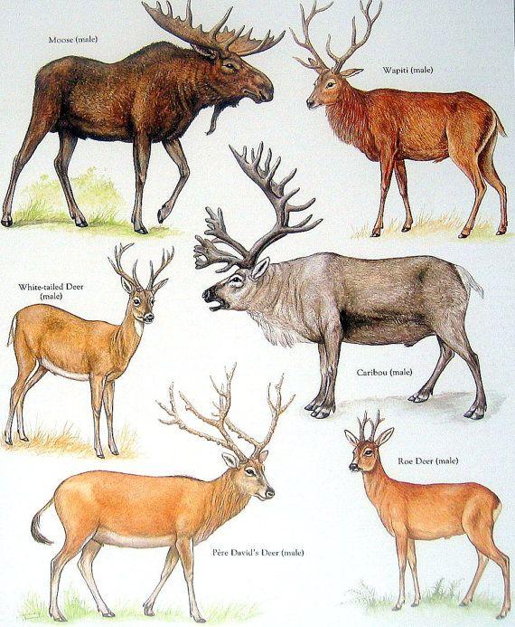 e0c87a256485e57bf581b1e121e98bbb--drawing-animals-animal-drawings.jpg