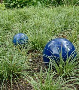 variegated-japanese-sedge-carex-morrowii-ball-horticultural-company_11982.jpg