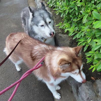 スフレ&マドレーヌの朝散歩