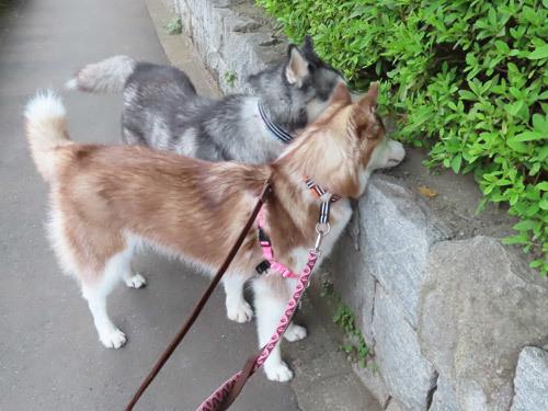 ふたり散歩