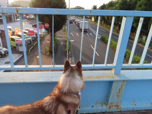 歩道橋のマドレーヌ