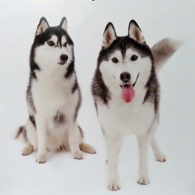 THE DOG 2002 ハスキーカレンダーのトリュフ&ポトフ