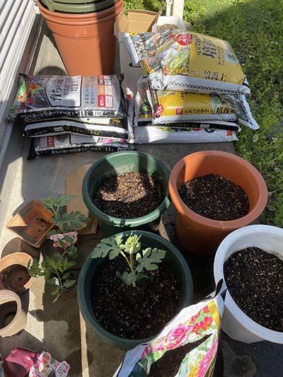 2021:4:21菜園準備