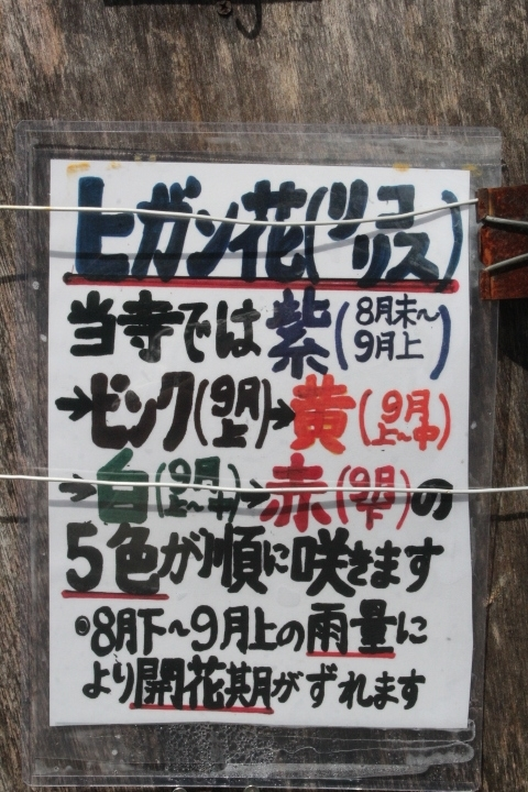 IMG_8714 (3)