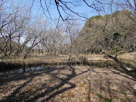 きれぎれの風彩 秋葉の森 自然保護ゾーン0207_210219-02