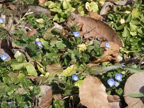 きれぎれの風彩 秋葉の森 自然保護ゾーン0207_210219-03