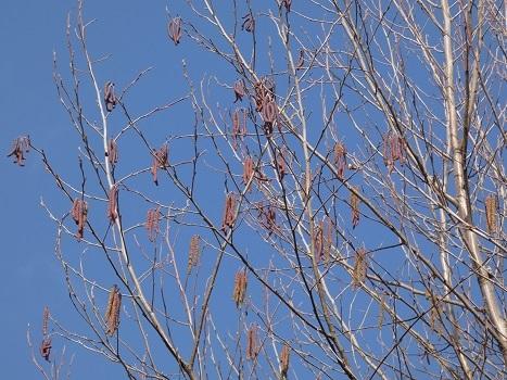 きれぎれの風彩 秋葉の森 自然保護ゾーン0207_210219-05