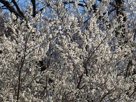 きれぎれの風彩 北本自然観察公園0221_210227-02