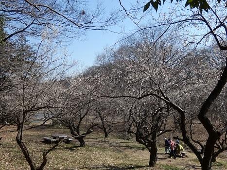 きれぎれの風彩 北本自然観察公園0221_210227-04