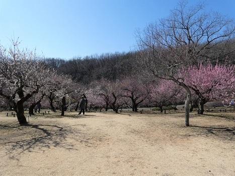 きれぎれの風彩 森林公園:梅林-0228_210310-02