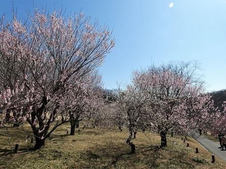 きれぎれの風彩 森林公園:梅林-0228_210310-05