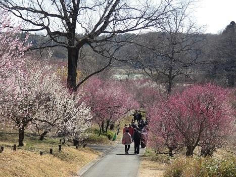 きれぎれの風彩 森林公園:梅林-0228_210310-06
