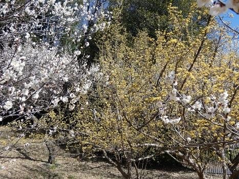 きれぎれの風彩 森林公園:梅林-0228_210310-08
