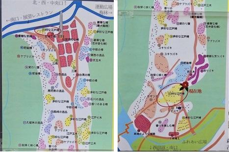 きれぎれの風彩 森林公園:椿園-0228_210315-00