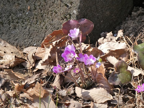 きれぎれの風彩 森林公園:早春の野草コース-0228_21021-1
