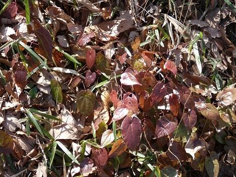 きれぎれの風彩 森林公園:早春の野草コース-0228_21021-6