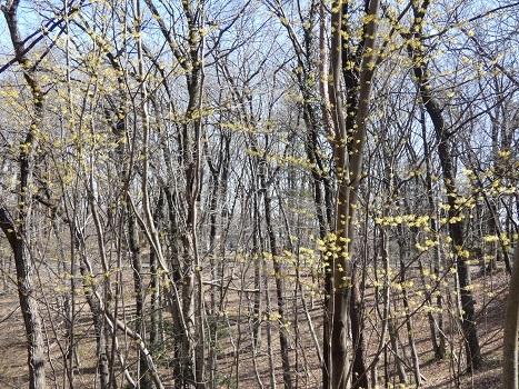 きれぎれの風彩 森林公園:早春の野草コース-0228_21021-7