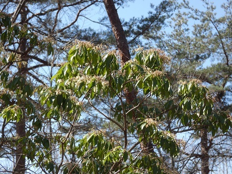 きれぎれの風彩 森林公園:早春の野草コース-0228_21021-8