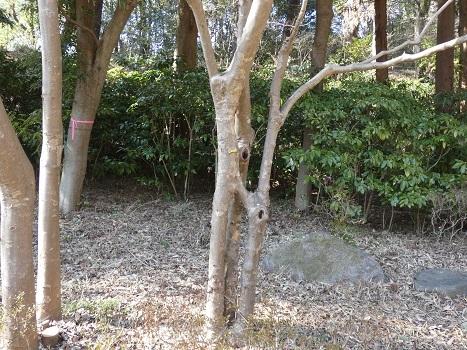 きれぎれの風彩 森林公園:その他-0228_210323-07