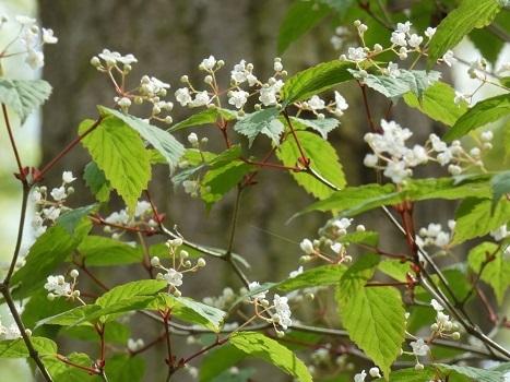 きれぎれの風彩 北本自然観察公園0403-1_210415-02