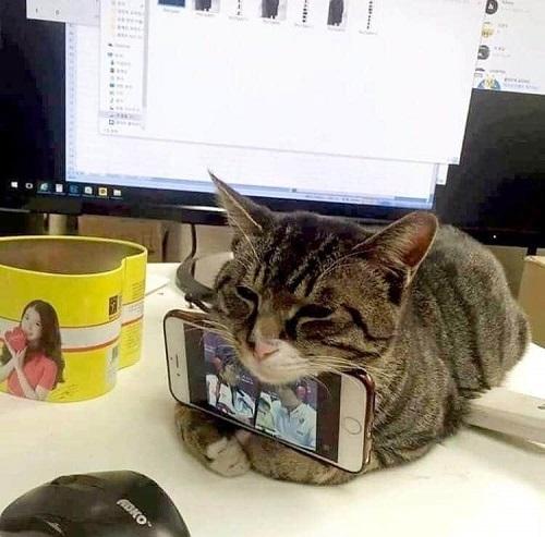 ネコのお仕事