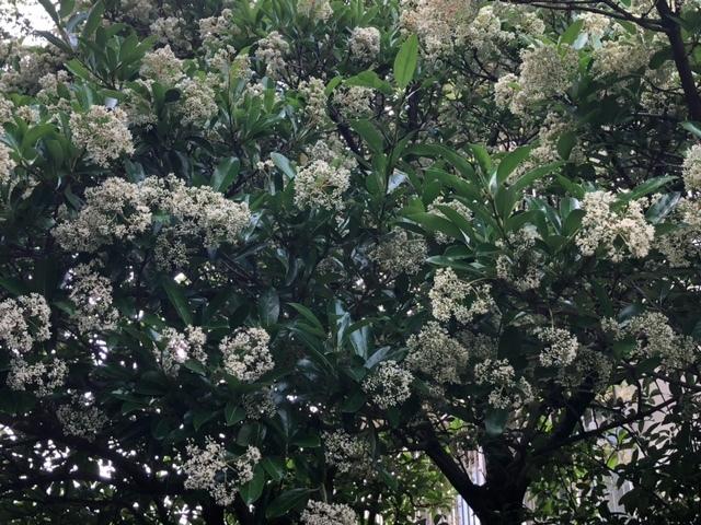 木の白い花
