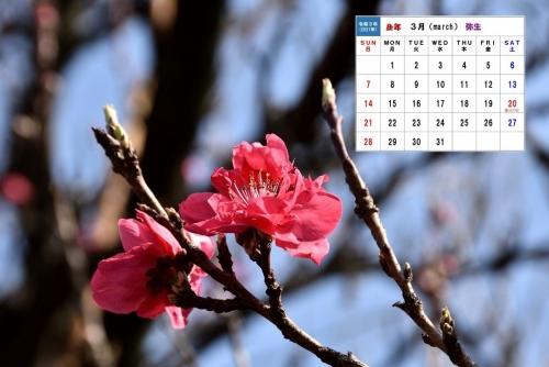 3月カレンダーホウキモモ