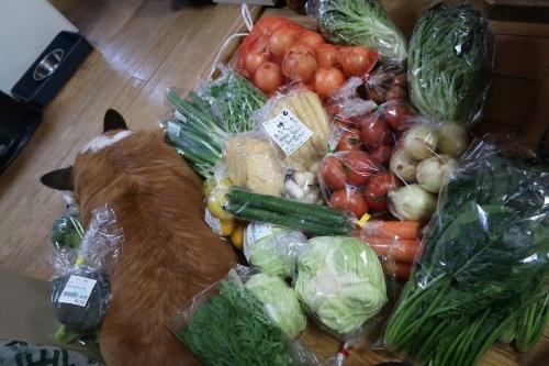いぬと野菜