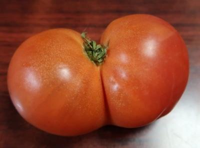 おしりトマト