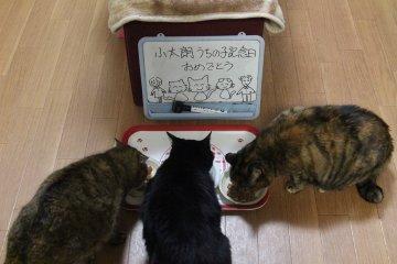 kotasuzumiyu171.jpg
