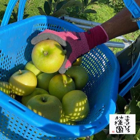 20210904きおう収穫りんごアップ小