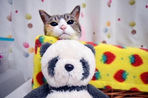 みくとパンダさん