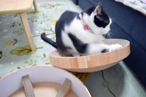 くぅ猫ボウルバリバリ